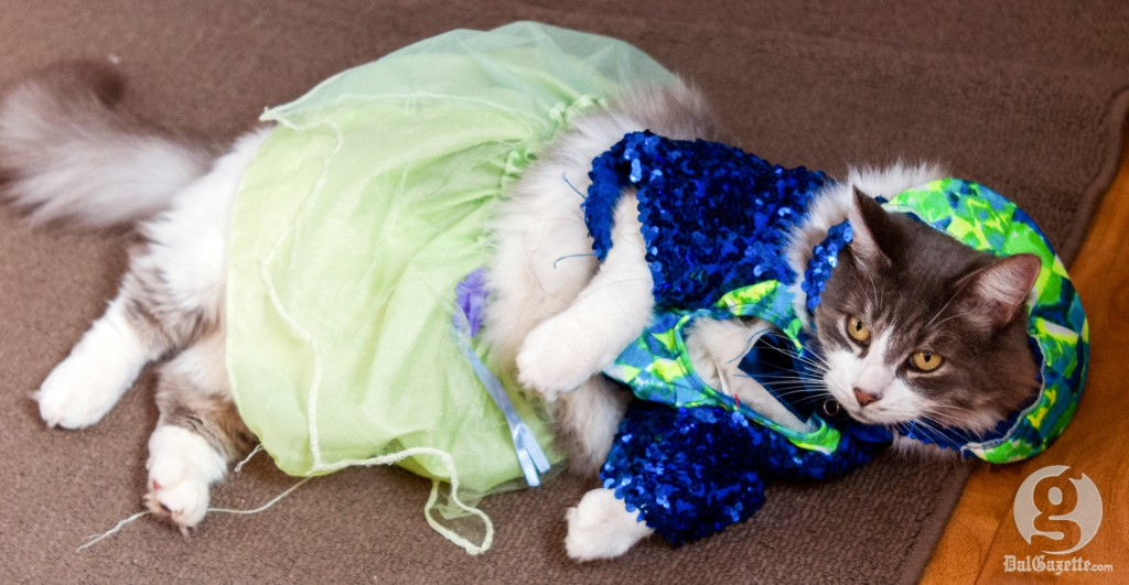 What sort of weird psychological complex are you instilling in your cat-turned-princess? (Matt McGlynn photo)