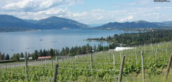 Taking a look at Riesling