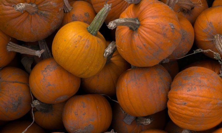Recipe: pumpkin beef chilli