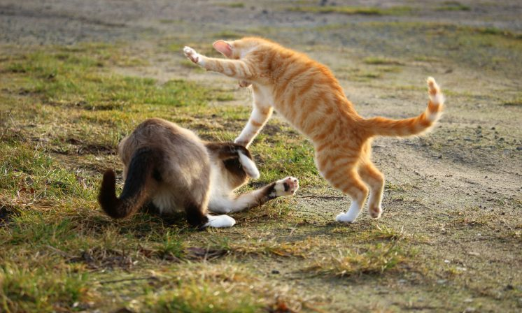 Perry vs. Swift: the tumultuous rivalry