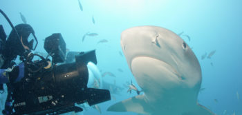 Finning a Dalhousie Connection: Sharkwater Extinction premieres at FIN