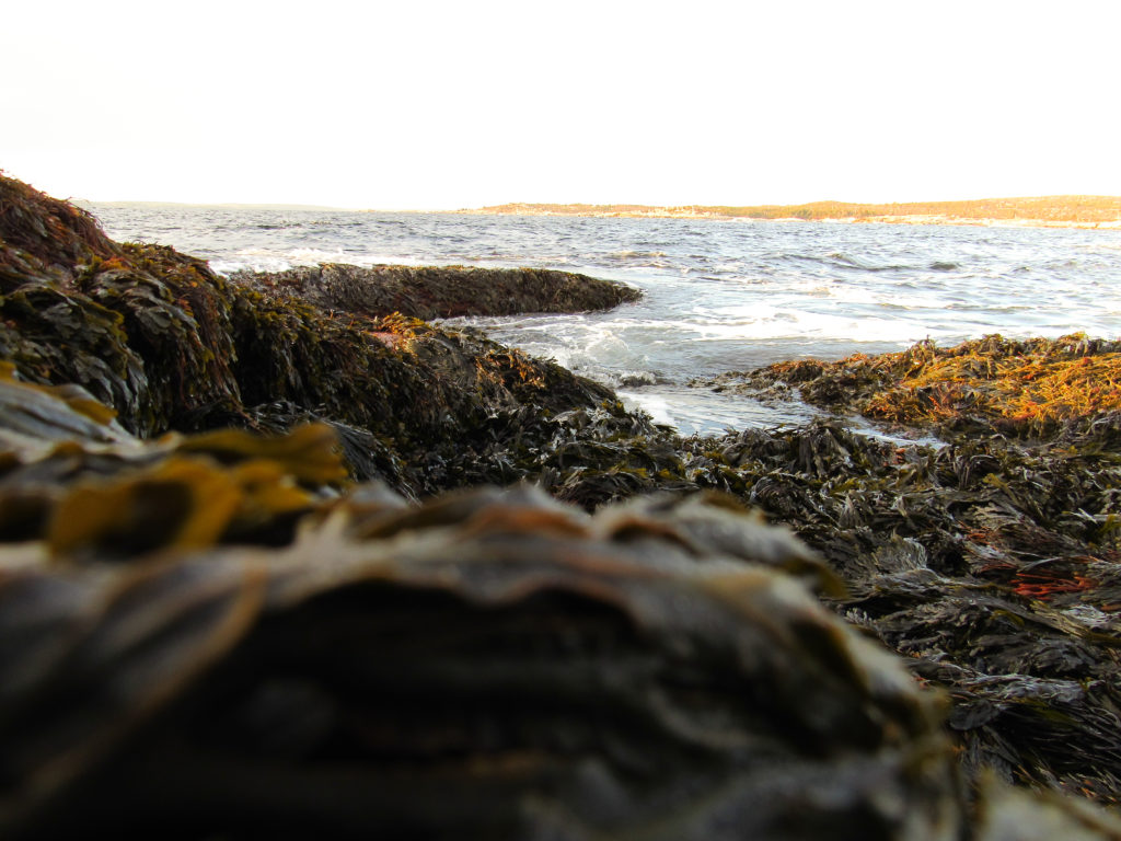 In this image: Seaweed on the coast of the ocean.