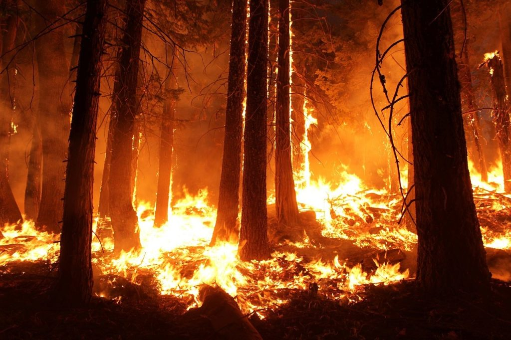 In this image: A forest fire.